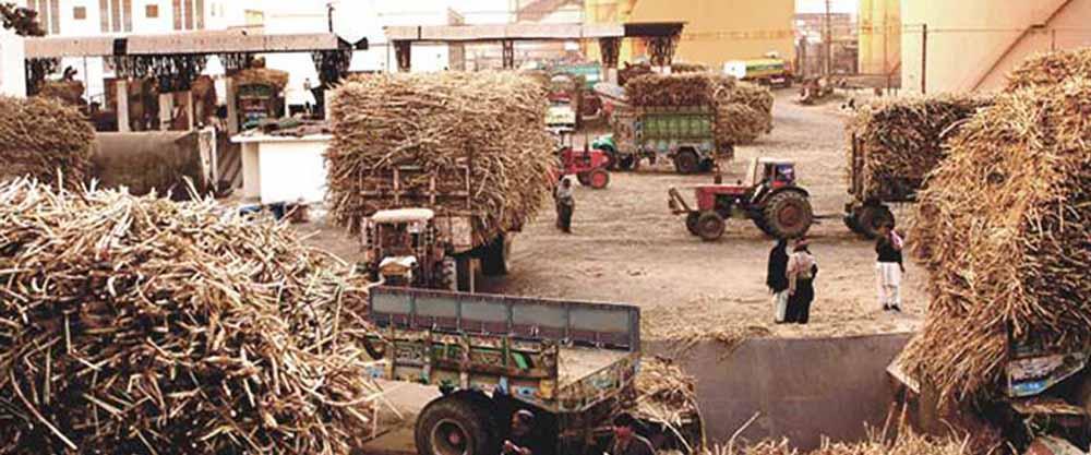 sindh badeen shugar mills workers lockdown